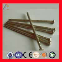Hot sales! common nail iron nail factory