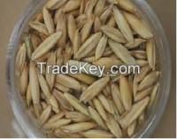 Oat grain from Canada
