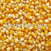 Yellow Corn grade #2 - from Canada