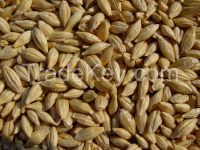 Barley - barley for beer production - from Canada