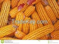 Yellow for animal Feed