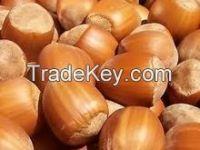 Raw Hazelnut in Shell