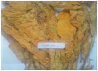 Providing Flue Cured Virginia (FCV) Tobacco - Grade: IL (Immature Light)