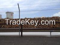 NZ/Australia Radiata Pine for sale