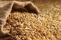 Sell Barley