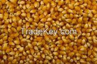 Yellow Pop Corn