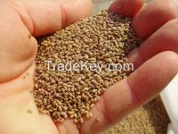 Quality Roasted Water Melon Seed