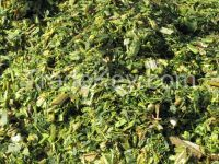 Quality Corn silage for Animal Feed