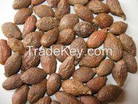 Quality Dried Malva nut