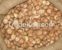 Quality Fresh and Dried Betel Nut