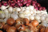 Quality Fresh Onion