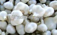 Quality Fresh Garlic