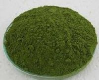Sell Moringa Leave