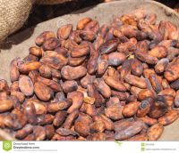 Sell DRY COCOA BEAN