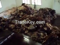 Sell HALAL-Wet and dried salted animal skin( Cow, Horse, Donkey, goat, and sheep )