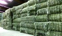 Alfalfa Hay and Pellet