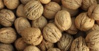 Shelled and Unshelled Roasted Walnuts
