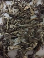 Dried Sea Horse
