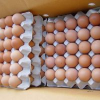 Fresh Chicken Table Eggs ( Brown and White )