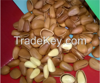 Sell Pine nuts in shell / Pine nut kernels