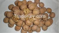 Sell Walnut in shell / Walnut Kernels