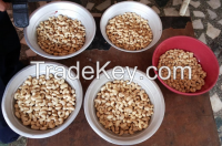 Sell Raw and roasted Cashew Nuts