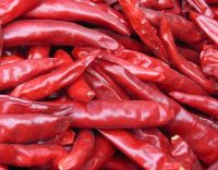 China quality red pepper Dry Red Chilli