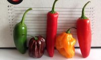 Good quality products Red Hot Chilli