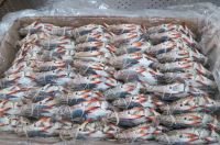 Best quality seafood and fresh frozen Crabs, Shrimps Fishes