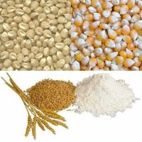 Fine Grains White and Yellow Corn, Barley, Buckwheat, Wheat, Rice for Sale at good prices