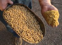 Non-GMO-Soybean-Meal-for-sale