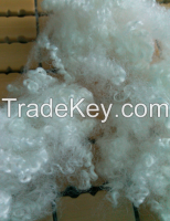 hollow conjugated polyester staple fiber virgin or recycled