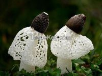 Sell Dried Bamboo Fungus