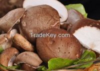 Sell Dried Mushrooms