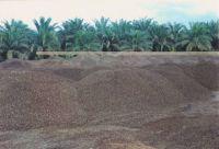 palm kennel shells