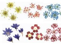 Sell Nail art:Dried flower