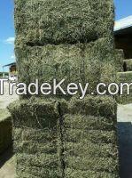 Alfalfa Hay in bales