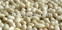 Selling WHITE BEANS