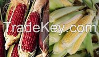 Selling Pop corn