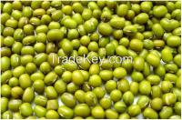 Exporting Green Mung Beans