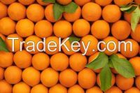 navel orange, valencia oranges