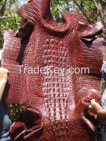 Raw Crocodile skin