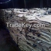 Cow Salted Hides