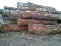Tali logs price