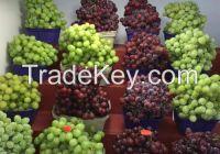 Wholesale price for fresh seedless green grapes per ton