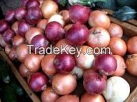 red/white and brown onion