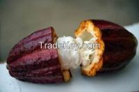 Best Selling Cocoa Beans & Powder