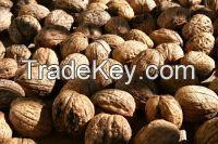 Almond Nuts , Apricot , Betel Nuts , Brazil Nuts