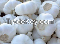 fresh garlic available