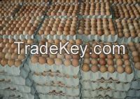 Fresh White & Brown Chicken Eggs Available